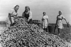 Российских студентов отправят на картошку